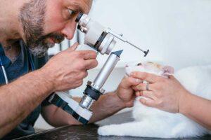 Veterinarian looking at cat eye through ocular scope
